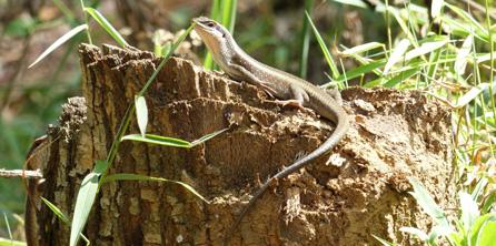 Lizard-Poser-222