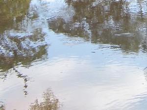 Mkuzi-03-Wasser-web